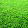 Thumbnail image for The Grass Is Greener Where You Water It