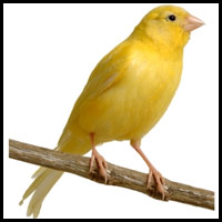 Post image for Tales From New England: Be The Canary (VIDEO)
